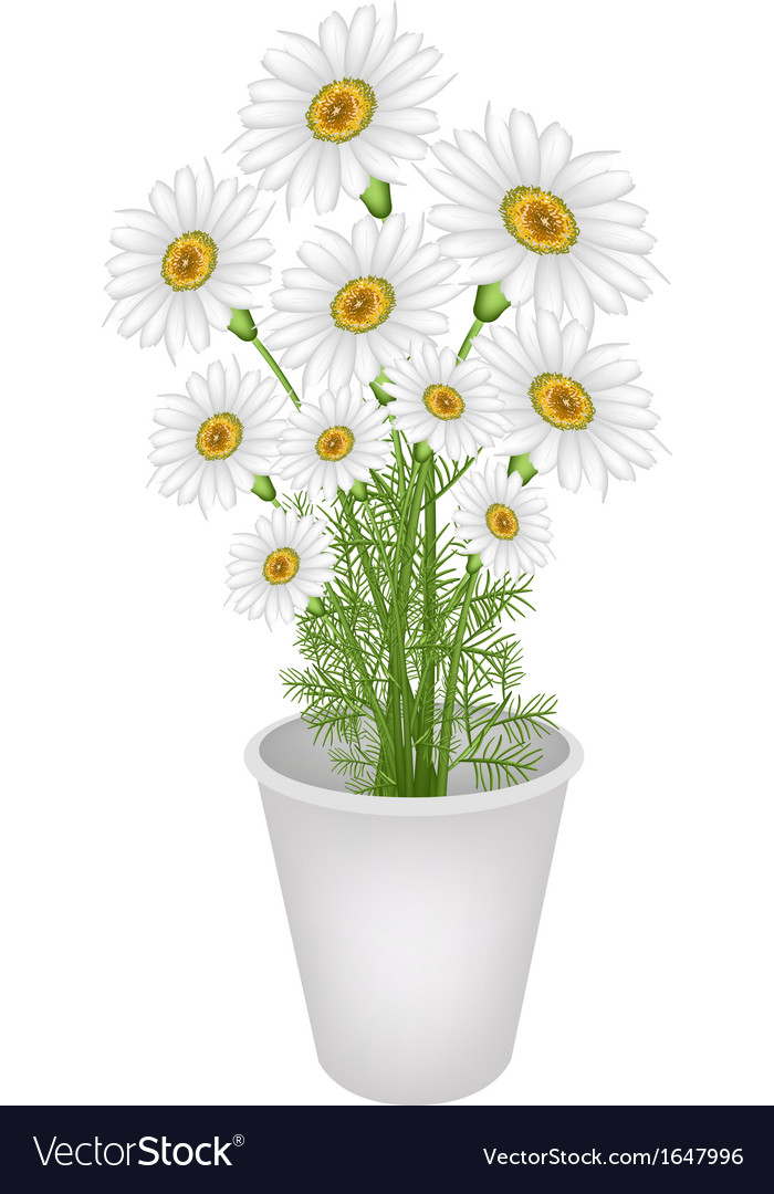 A lovely fresh chamomile in flower pot vector | Price: 1 Credit (USD $1)