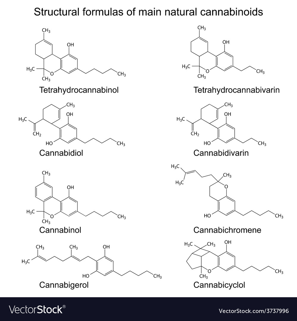 Chemical formulas of natural cannabinoids vector | Price: 1 Credit (USD $1)