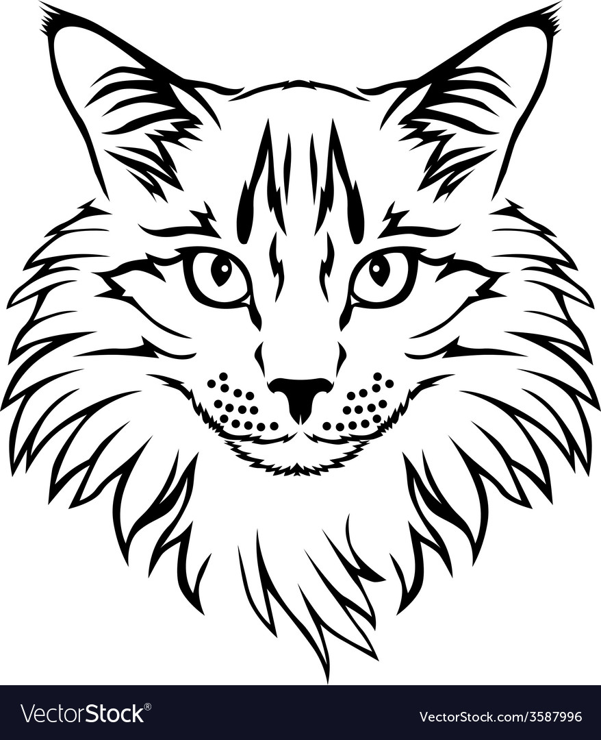 Contour cat vector | Price: 1 Credit (USD $1)