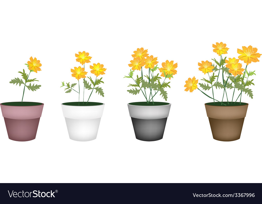 Set of cosmos flowers in flower pot vector | Price: 1 Credit (USD $1)