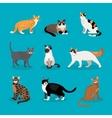 Set of cats vector