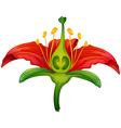 Flower parts vector