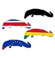 Caiman flags vector