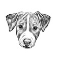 Sketch jack russell terrier dog hand drawn vector