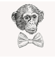 Sketch monkey face with bow tie hand drawn doodle vector