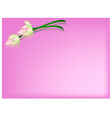 Pink lotus flower on a pink background vector