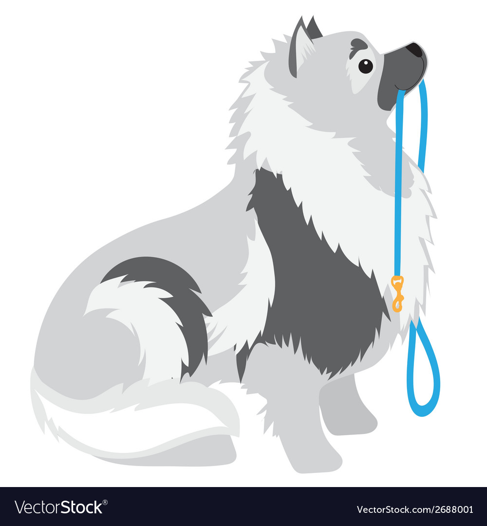 Keeshond leash vector | Price: 1 Credit (USD $1)