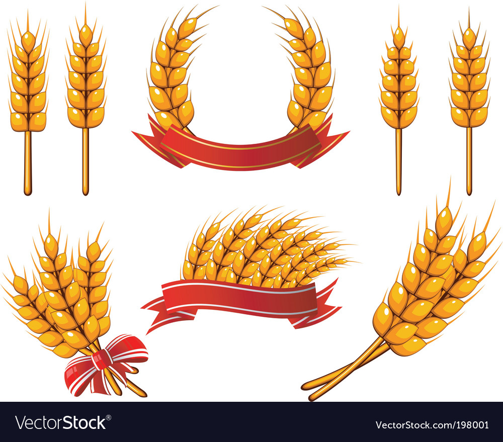 Wheat icons vector | Price: 1 Credit (USD $1)