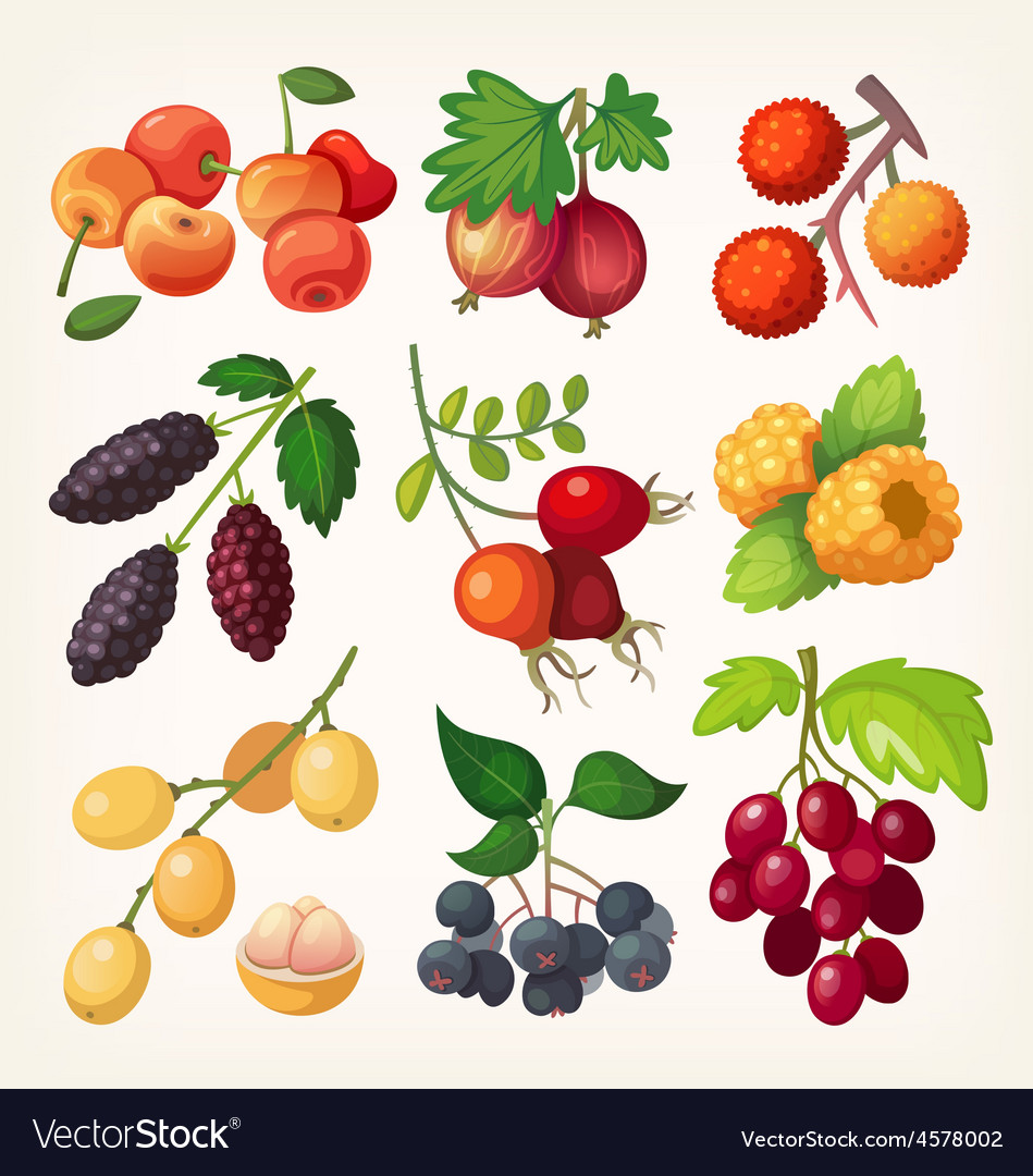 Juicy colorful berry icons vector | Price: 5 Credit (USD $5)