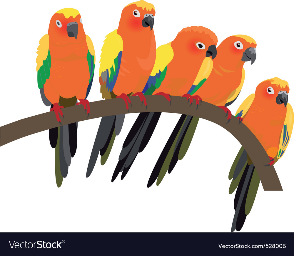 Bright sun conure parrots on white vector | Price: 1 Credit (USD $1)