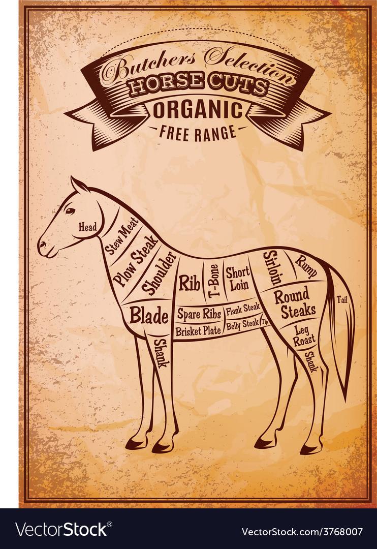 Diagram cut carcasses horse vector | Price: 1 Credit (USD $1)