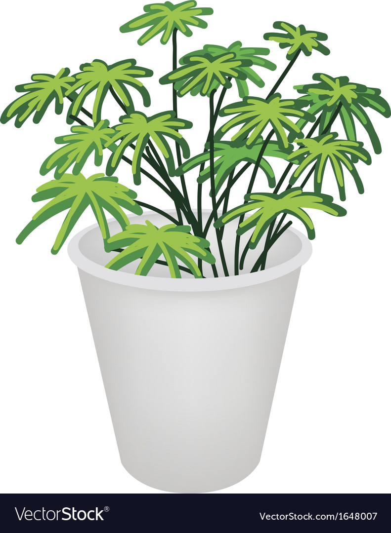 Evergreen plant in a flower pot vector | Price: 1 Credit (USD $1)