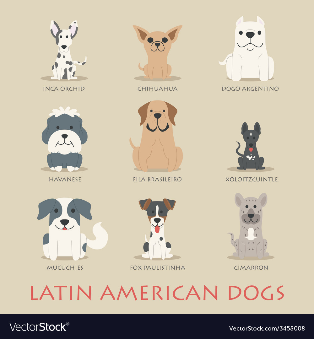 Set of latin american dogs vector | Price: 1 Credit (USD $1)