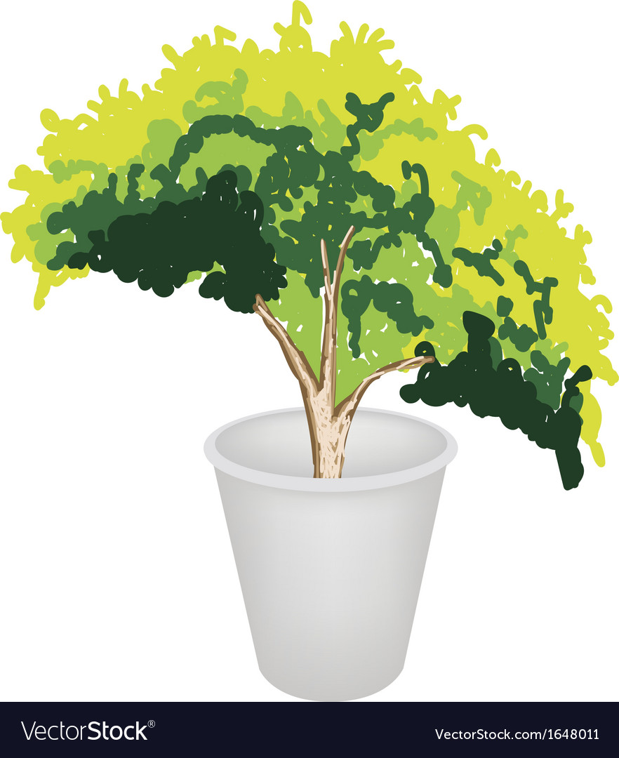Evergreen plant in flower pot vector | Price: 1 Credit (USD $1)
