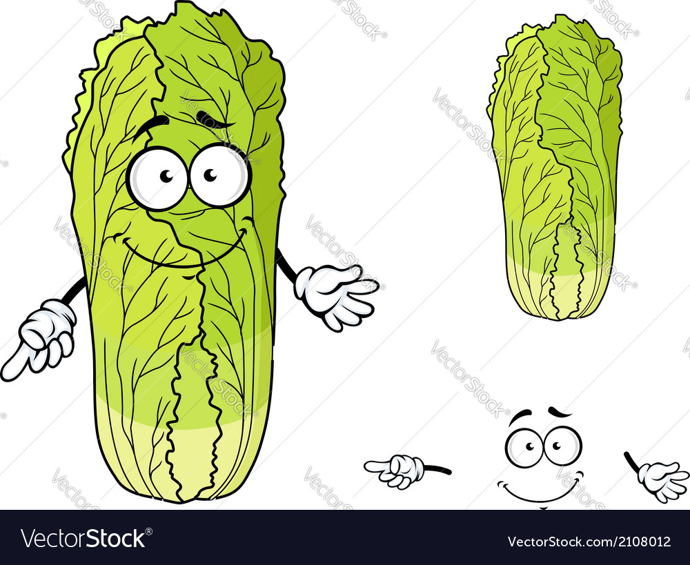 Healthy leafy cartoon chinese cabbage vegetable vector | Price: 1 Credit (USD $1)
