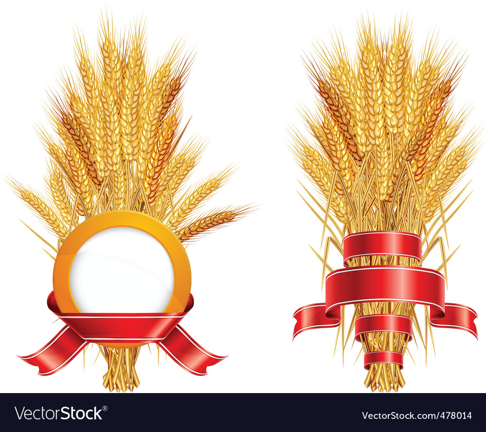 Ears of wheat amp ribbon vector | Price: 1 Credit (USD $1)