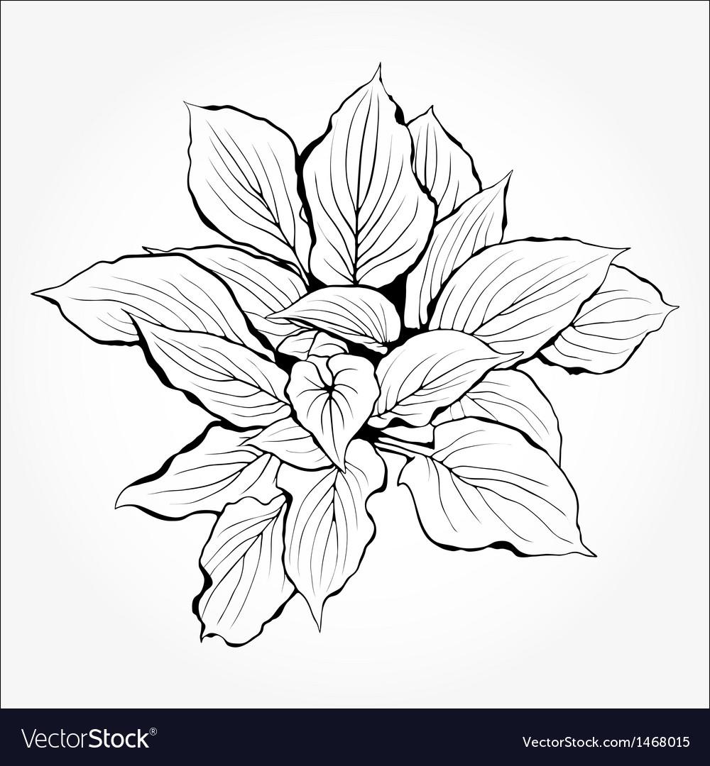 Plant silhouette vector | Price: 1 Credit (USD $1)