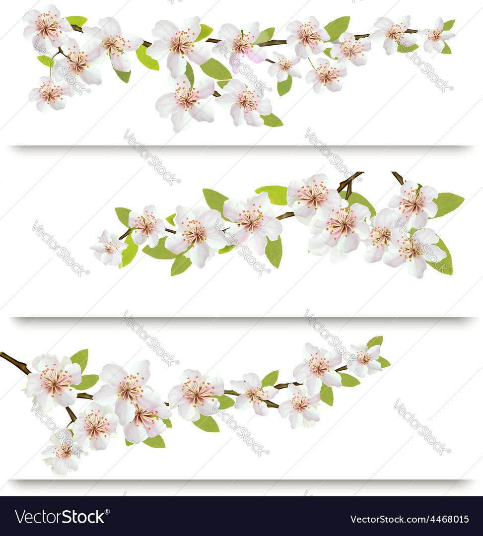 Three sakura branches banners vector | Price: 3 Credit (USD $3)