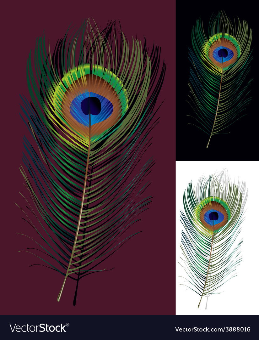 Feathers vector   Price: 1 Credit (USD $1)