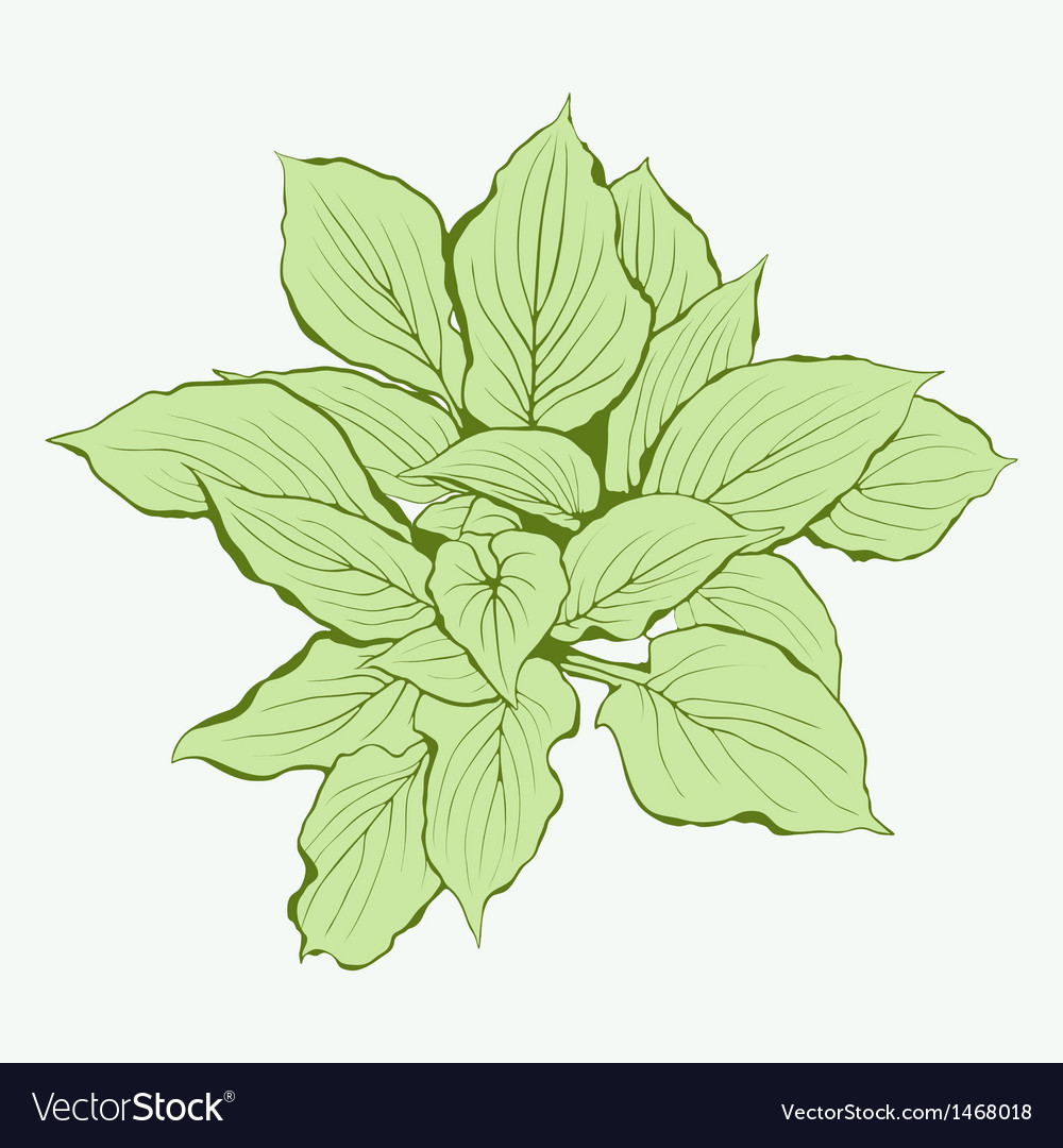 Green plant vector | Price: 1 Credit (USD $1)