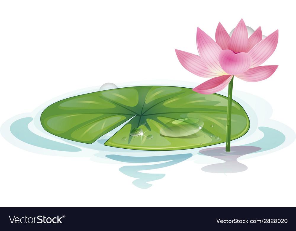 Lotus vector | Price: 1 Credit (USD $1)