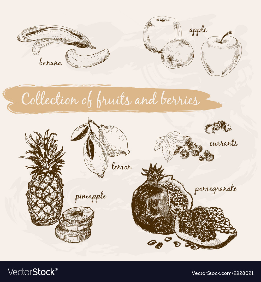 Collection of fruits and berries vector | Price: 1 Credit (USD $1)