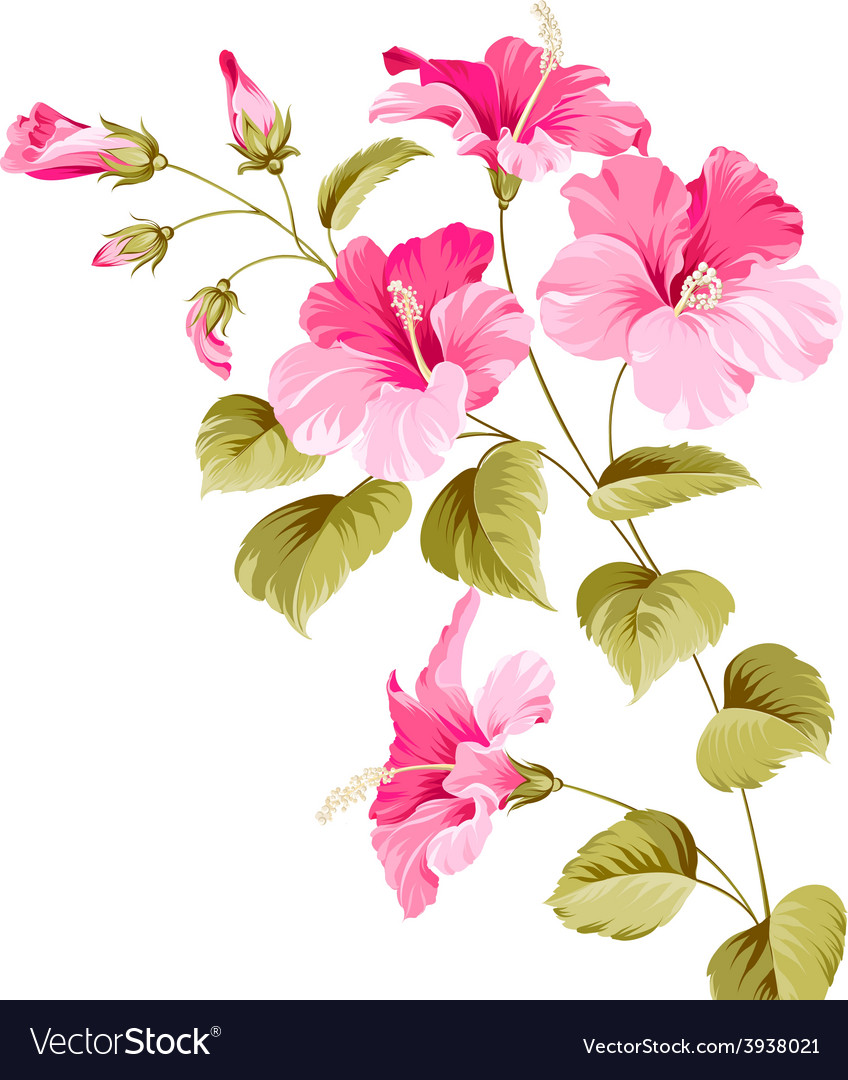 Flower hibiscus vector | Price: 1 Credit (USD $1)