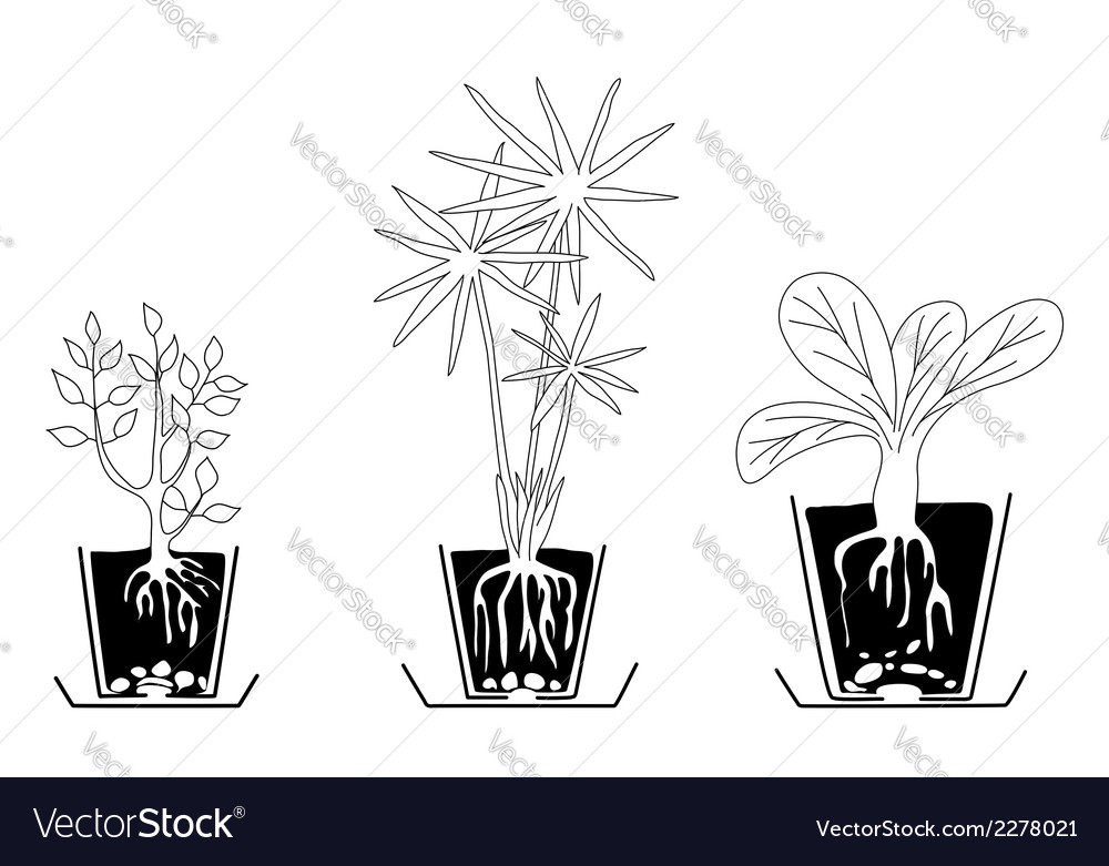Set of houseplants vector | Price: 1 Credit (USD $1)