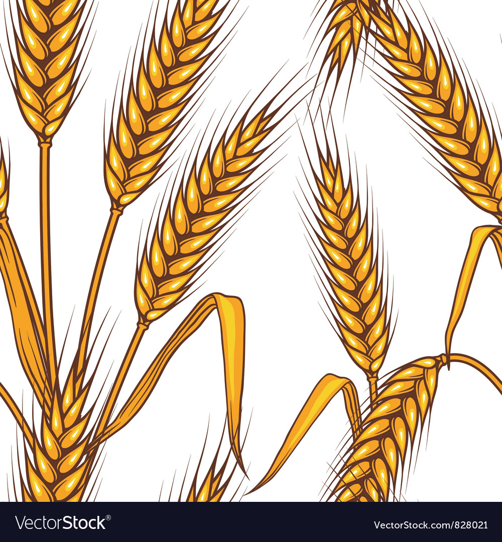 Wheat field seamless pattern vector | Price: 1 Credit (USD $1)