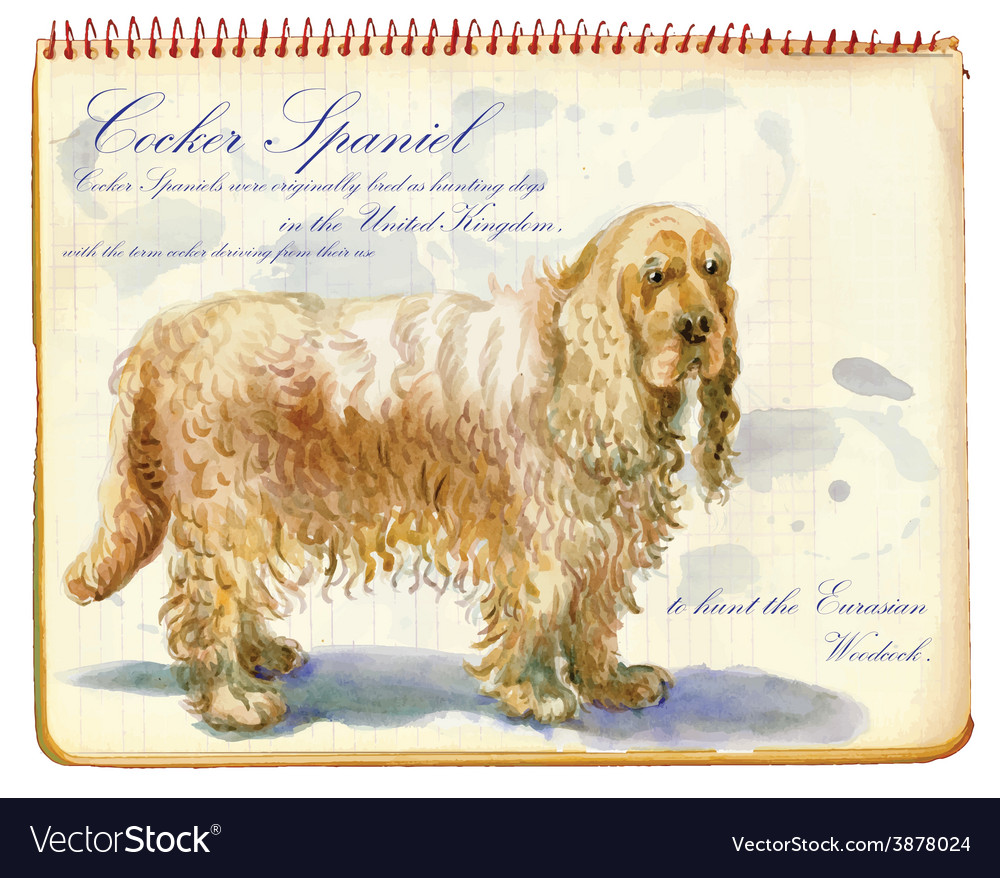 Cocker spaniel - an hand painted vector | Price: 1 Credit (USD $1)