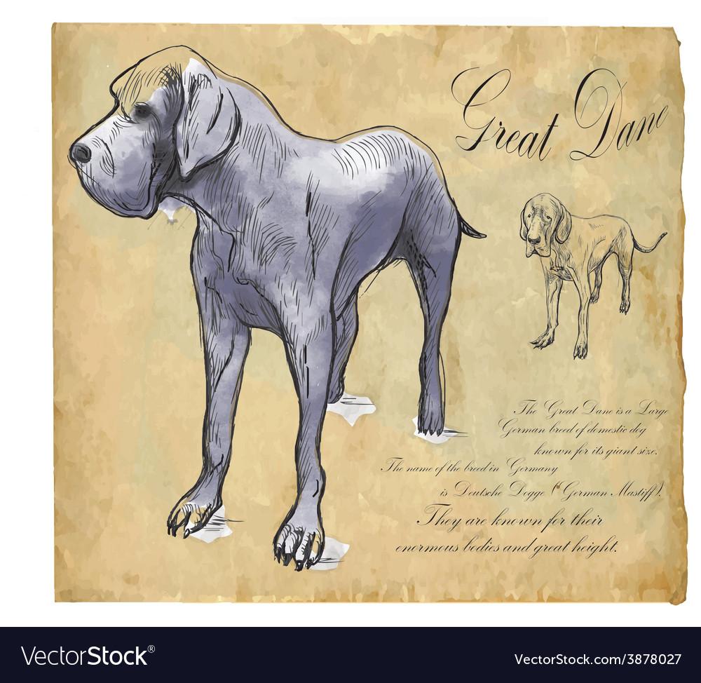 Great dane german mastiff - an hand drawn vector | Price: 1 Credit (USD $1)