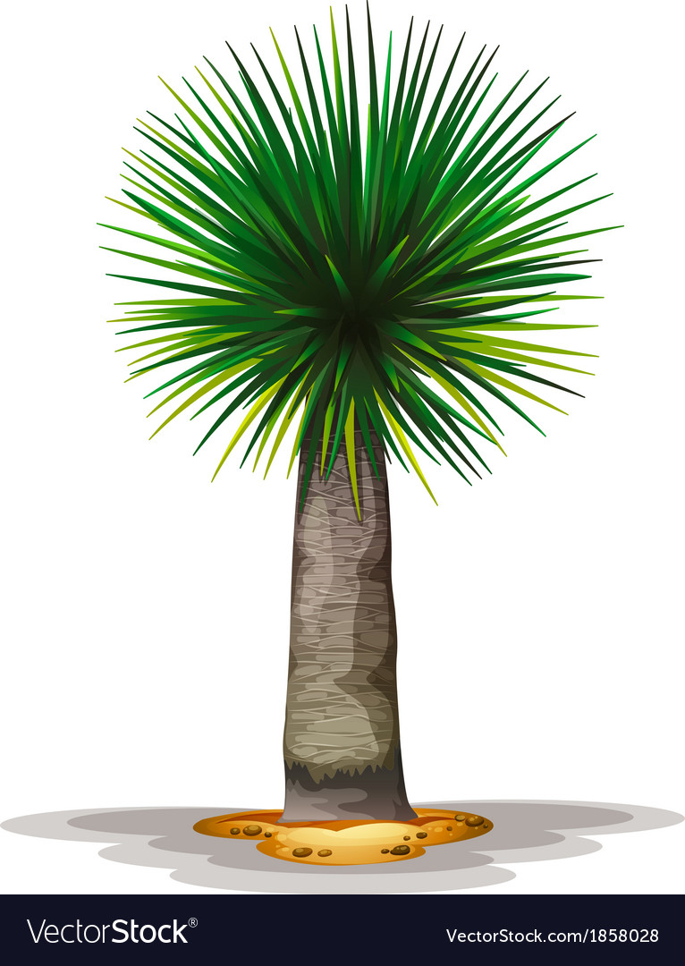 Dracaena draco vector | Price: 1 Credit (USD $1)