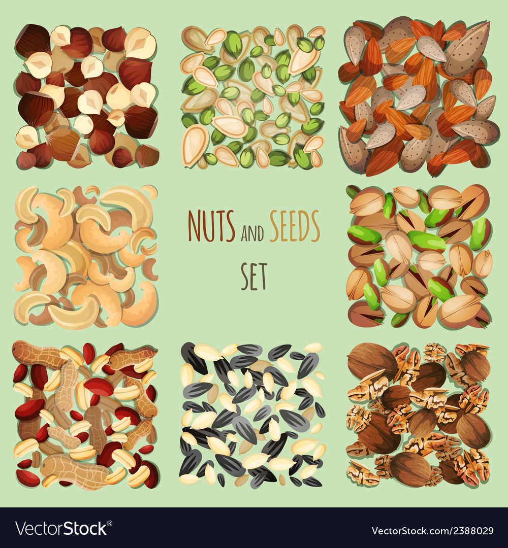 Nuts and seeds set vector | Price: 3 Credit (USD $3)