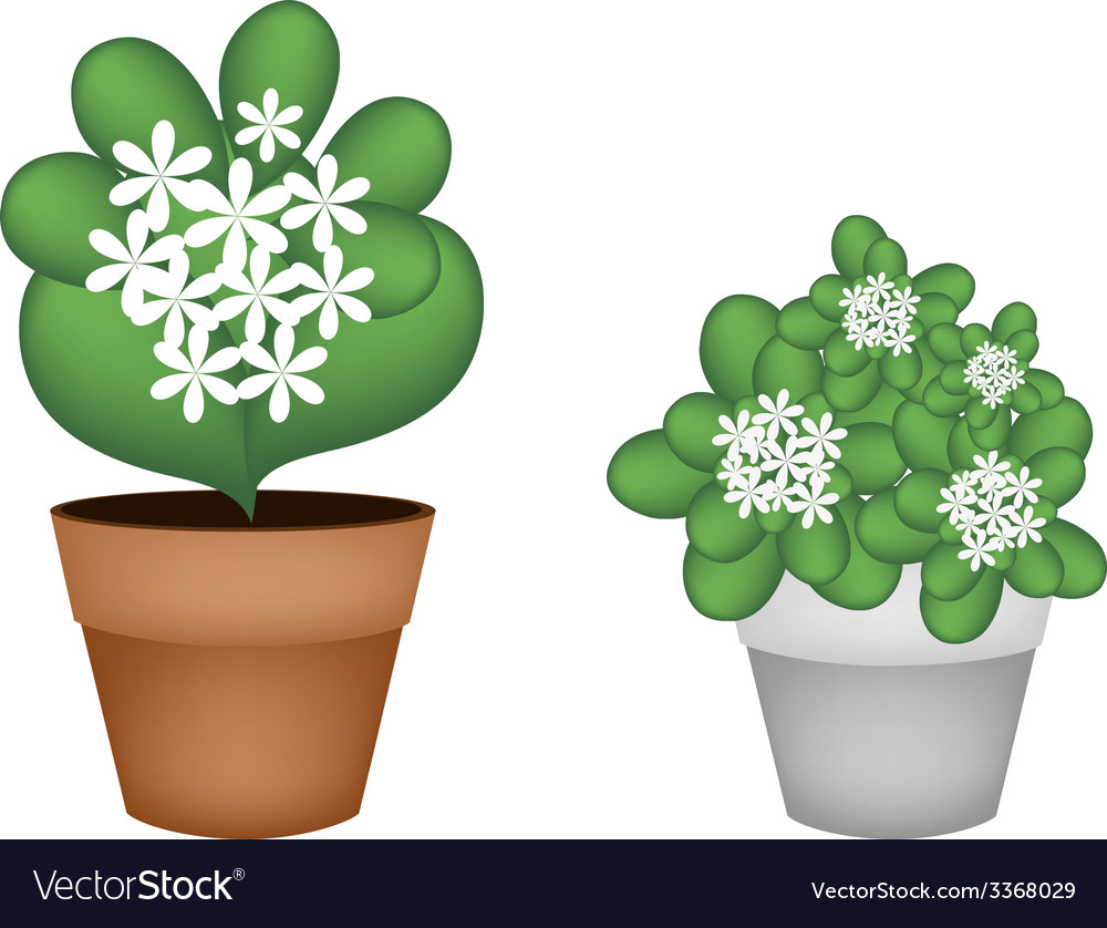 Two white jasmine flowers in flower pot vector | Price: 1 Credit (USD $1)
