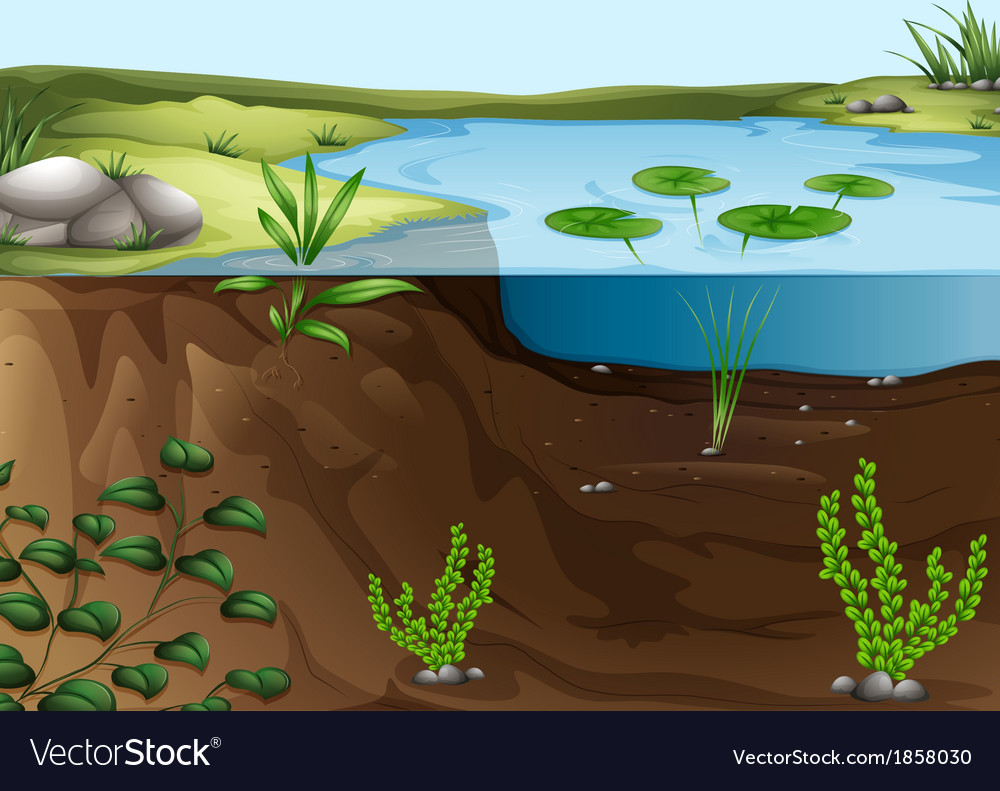 A pond ecosystem vector | Price: 3 Credit (USD $3)