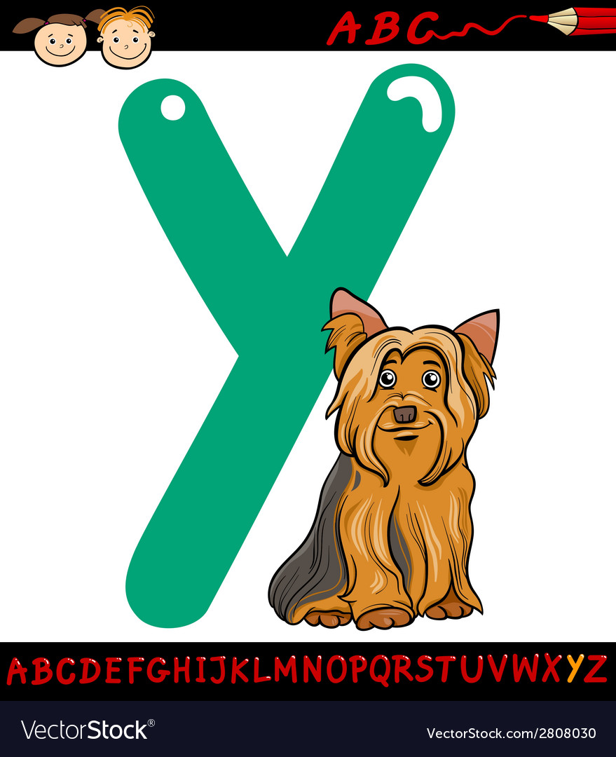 Letter y for yorkshire terrier dog vector | Price: 1 Credit (USD $1)
