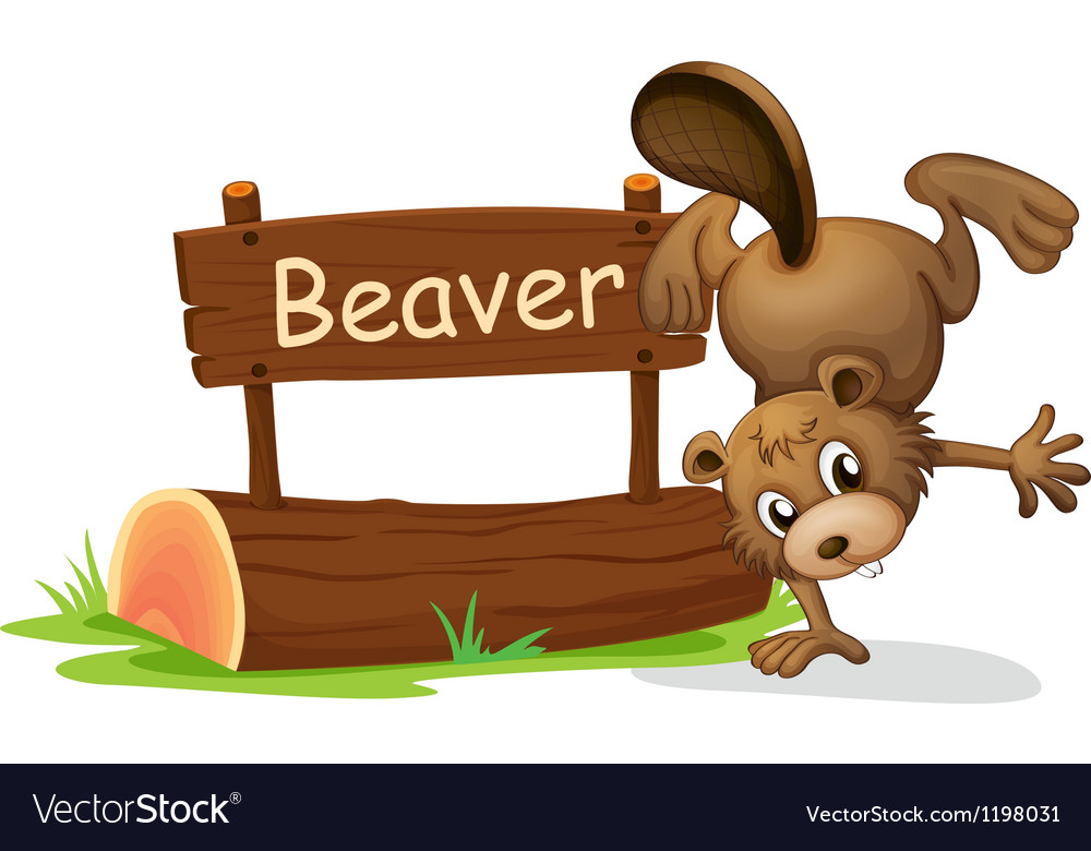 A beaver performing a handstand beside a signboard vector | Price: 1 Credit (USD $1)