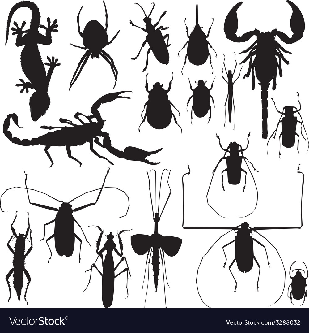 Insects vector | Price: 1 Credit (USD $1)