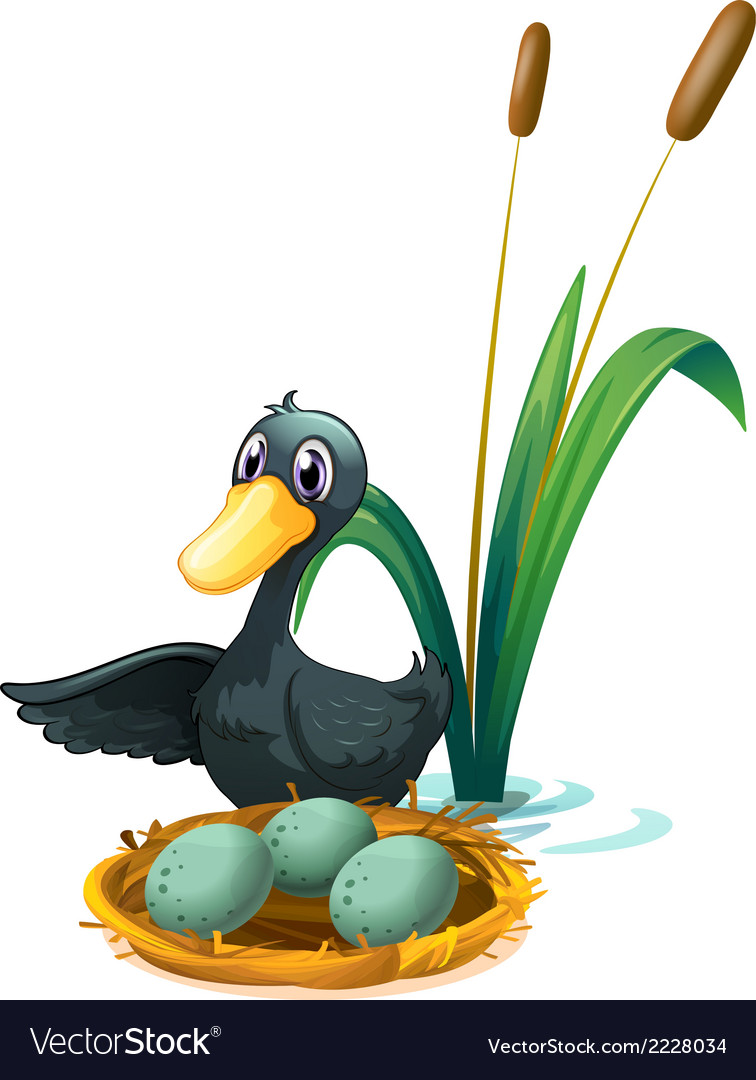 A duck at the pond beside her eggs vector | Price: 1 Credit (USD $1)