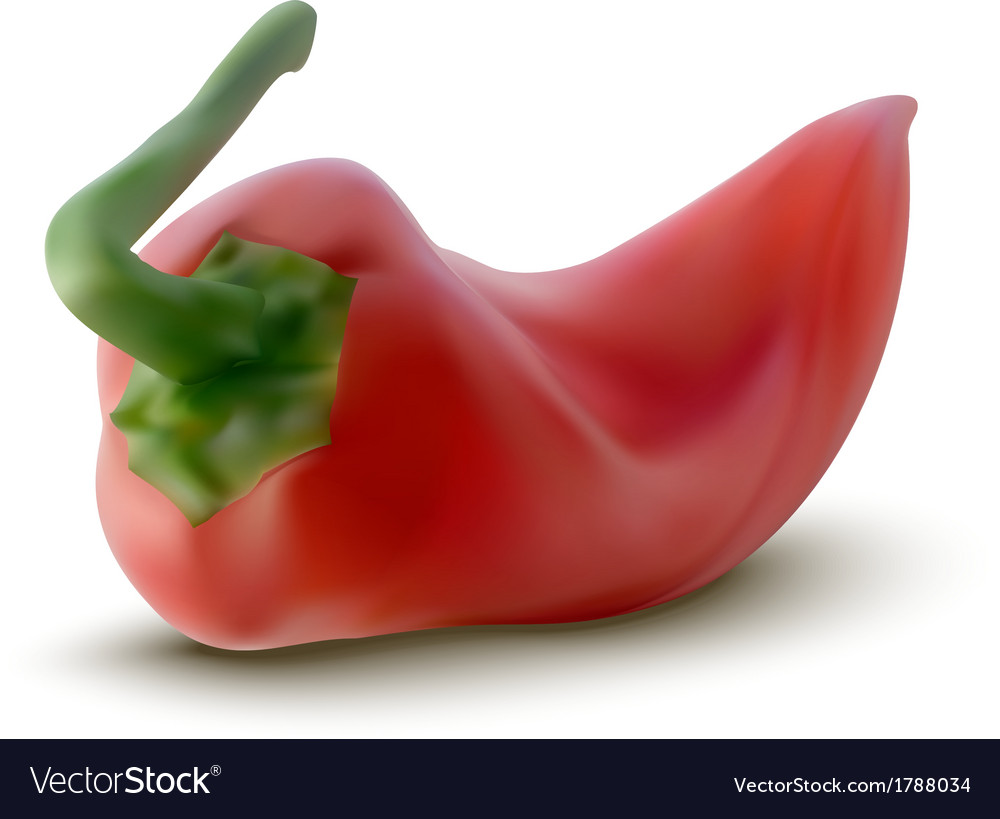 Red pepper vector | Price: 1 Credit (USD $1)