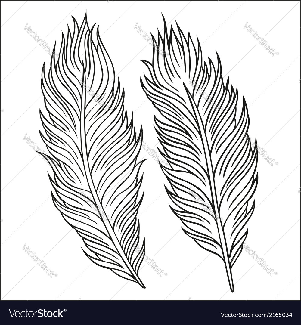 Vintage feather set hand-drawn vector | Price: 1 Credit (USD $1)