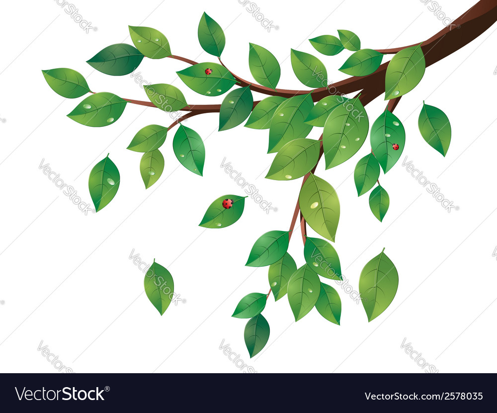 Green leaves tree branch2 vector | Price: 1 Credit (USD $1)