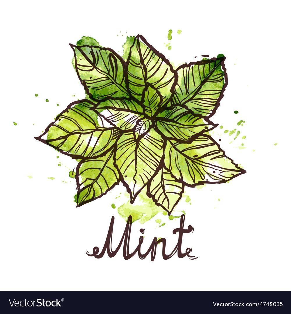 Sketch mint leaf vector   Price: 1 Credit (USD $1)