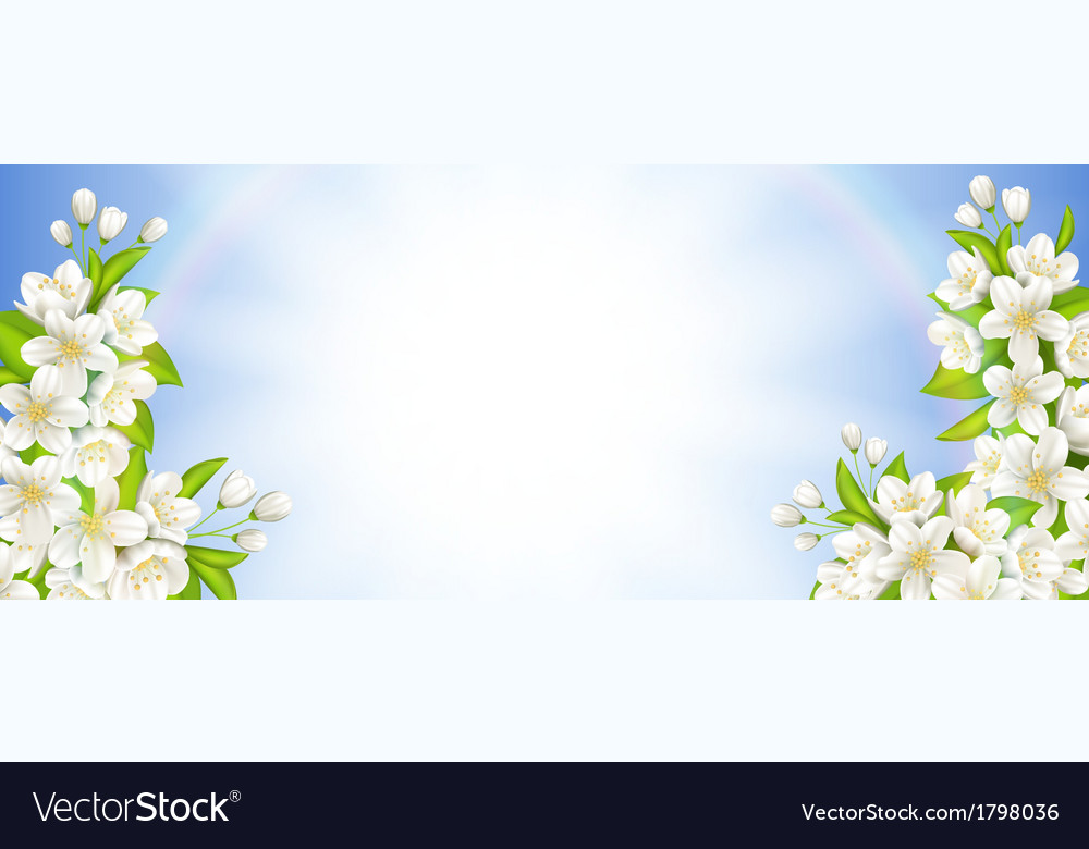 Banner with flowering cherry vector | Price: 1 Credit (USD $1)