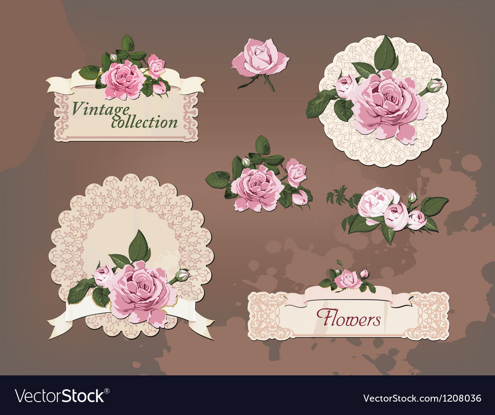 Vintage collection of beautiful roses vector | Price: 1 Credit (USD $1)