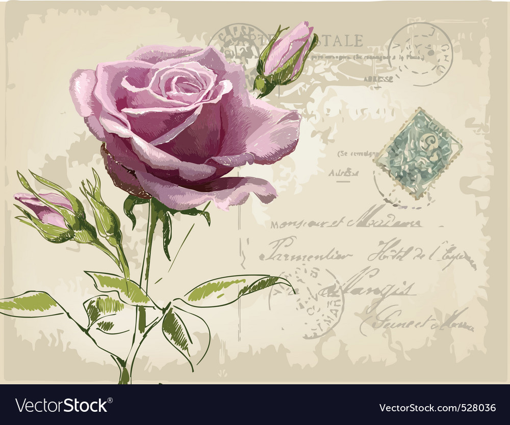 Vintage postcard with beautiful rose handdrawing vector | Price: 3 Credit (USD $3)