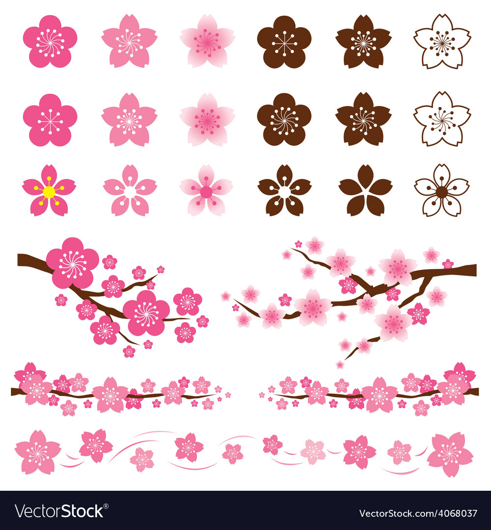 Cherry blossoms or sakura flowers ornament vector | Price: 1 Credit (USD $1)