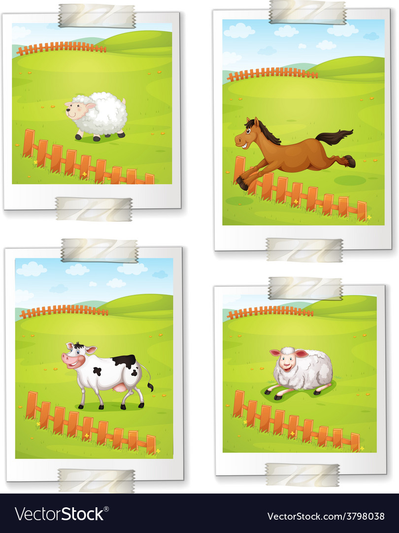 Four photos of animals vector | Price: 1 Credit (USD $1)