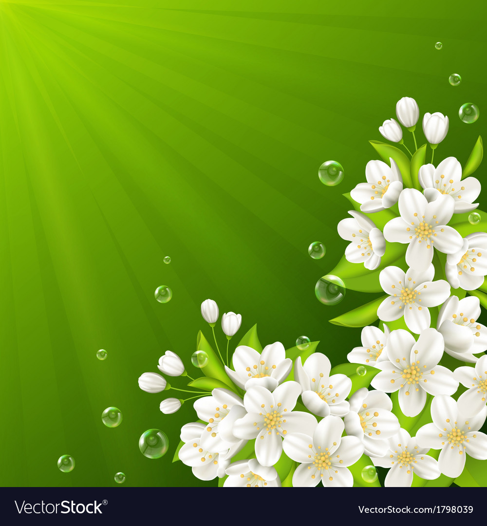 Blossoming branch of cherry vector | Price: 1 Credit (USD $1)