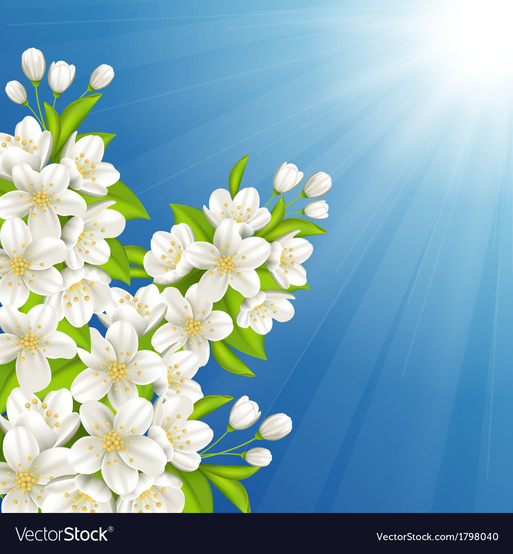 Blossoming cherry vector | Price: 1 Credit (USD $1)